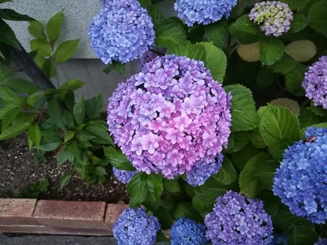 P10 lite flower 1 8M